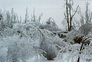 FEMA_-_1013_-_Photograph_by_John_Ferguson_taken_on_01-25-1998_in_New_York